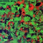 Hannelore, abstrakte Bilder Acryl – 10